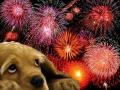 Petárda, kutya, szilveszter1